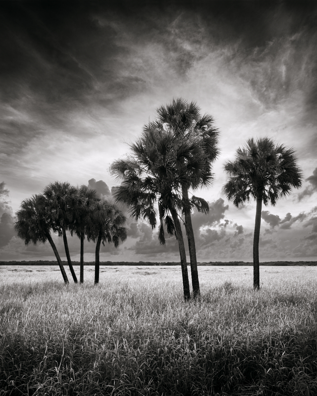 Myakka Palms © Paul Marcellini – Honorable Mention in Landscape, Professional