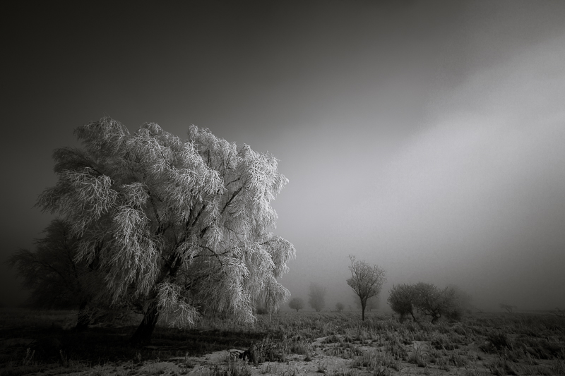 Winter Darkness © Bas Meelker – Honorable Mention in Landscape, Professional