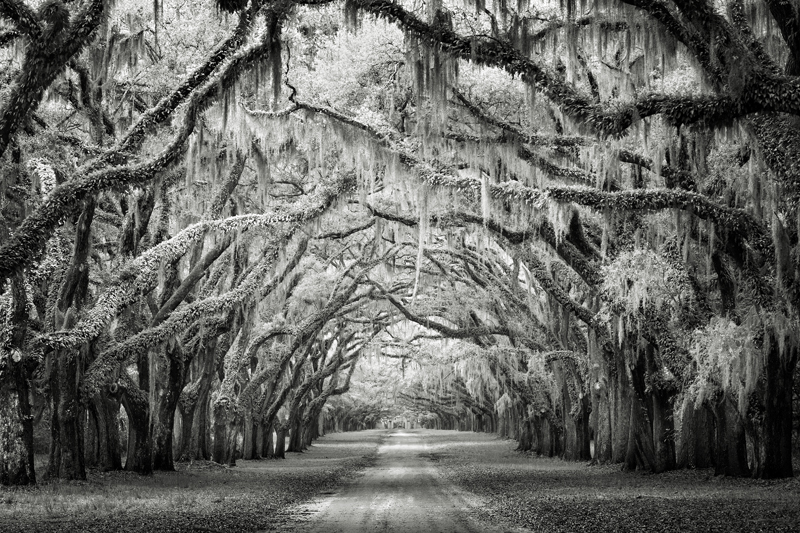 Wormsloe-Canopy © Joseph-Romeo – Honorable Mention in Landscape, Professional