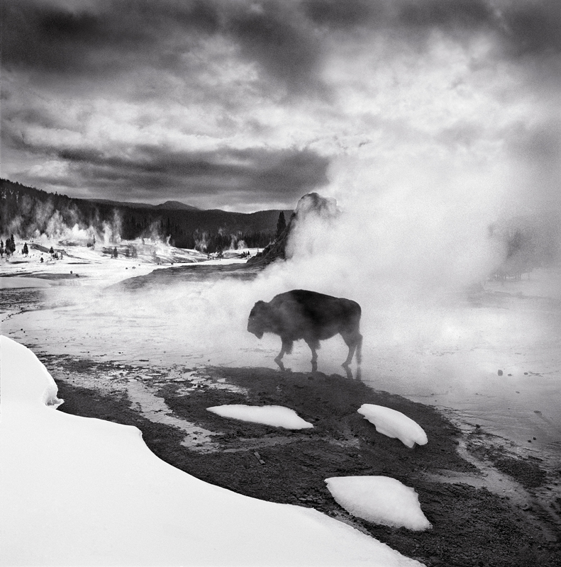 Yellowstone Survival © Kent Gunnufson – Honorable Mention in Landscape, Professional