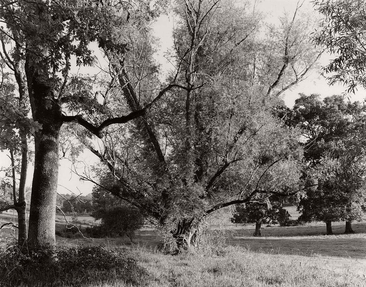 wayne-gudmundson-trees-of-burgundy-01