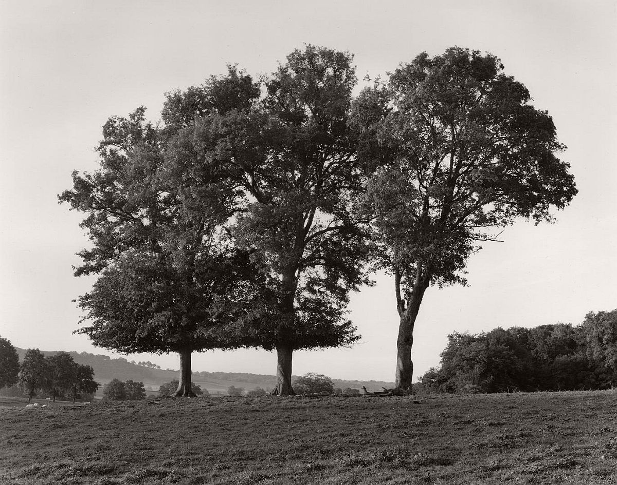 wayne-gudmundson-trees-of-burgundy-02