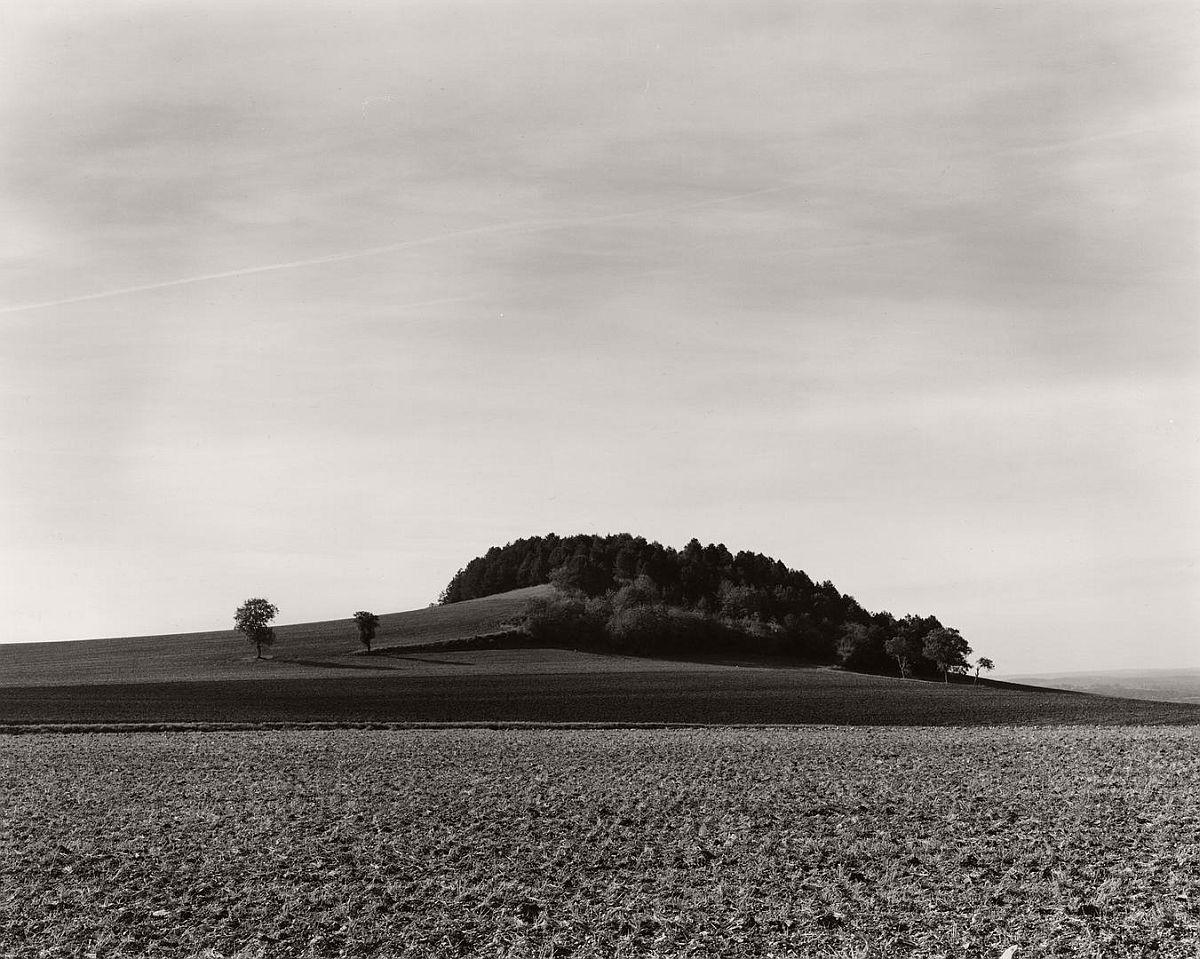 wayne-gudmundson-trees-of-burgundy-03