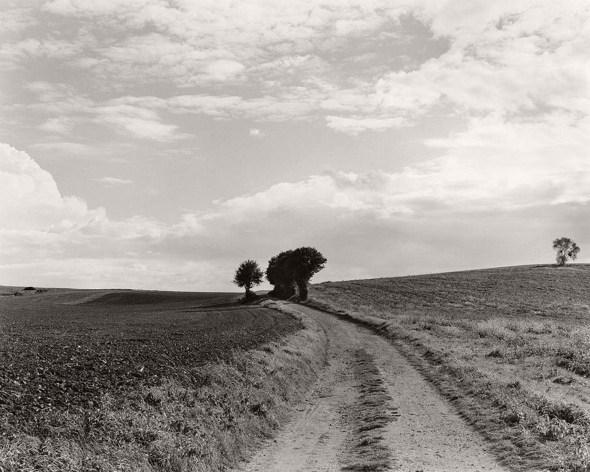 wayne-gudmundson-trees-of-burgundy-04