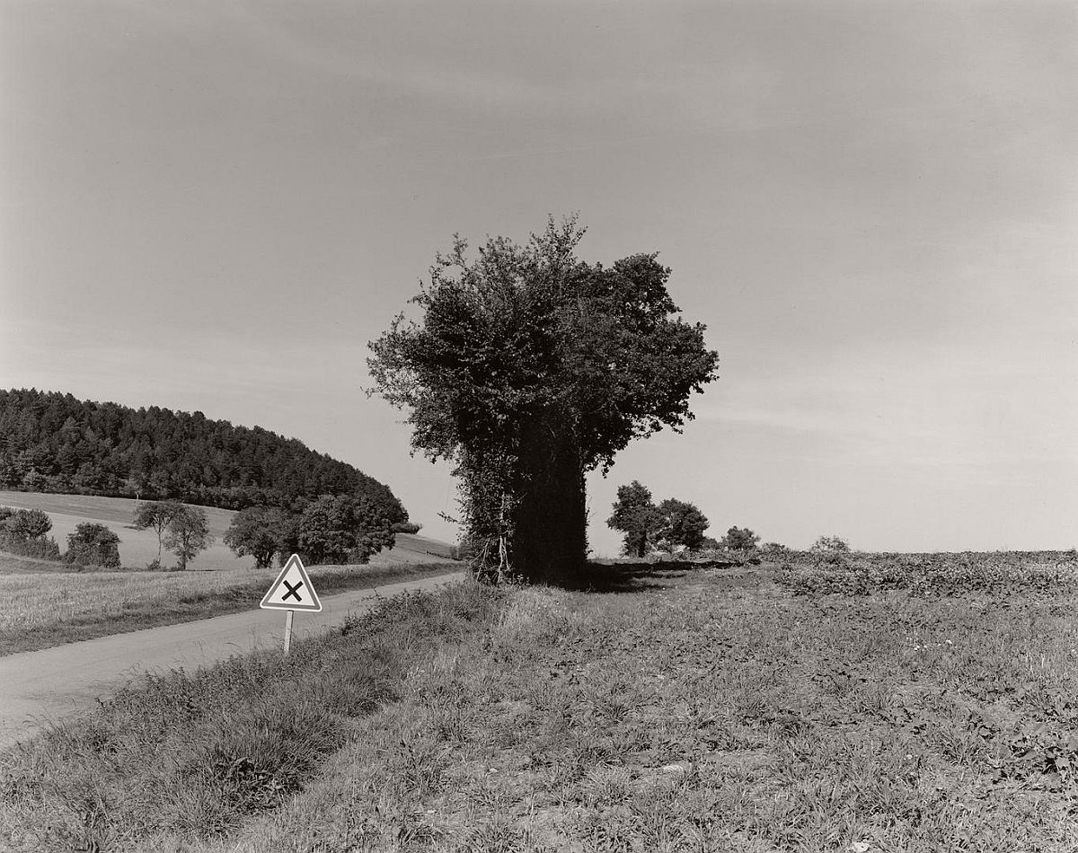 wayne-gudmundson-trees-of-burgundy-05