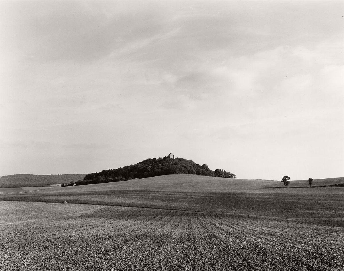 wayne-gudmundson-trees-of-burgundy-07