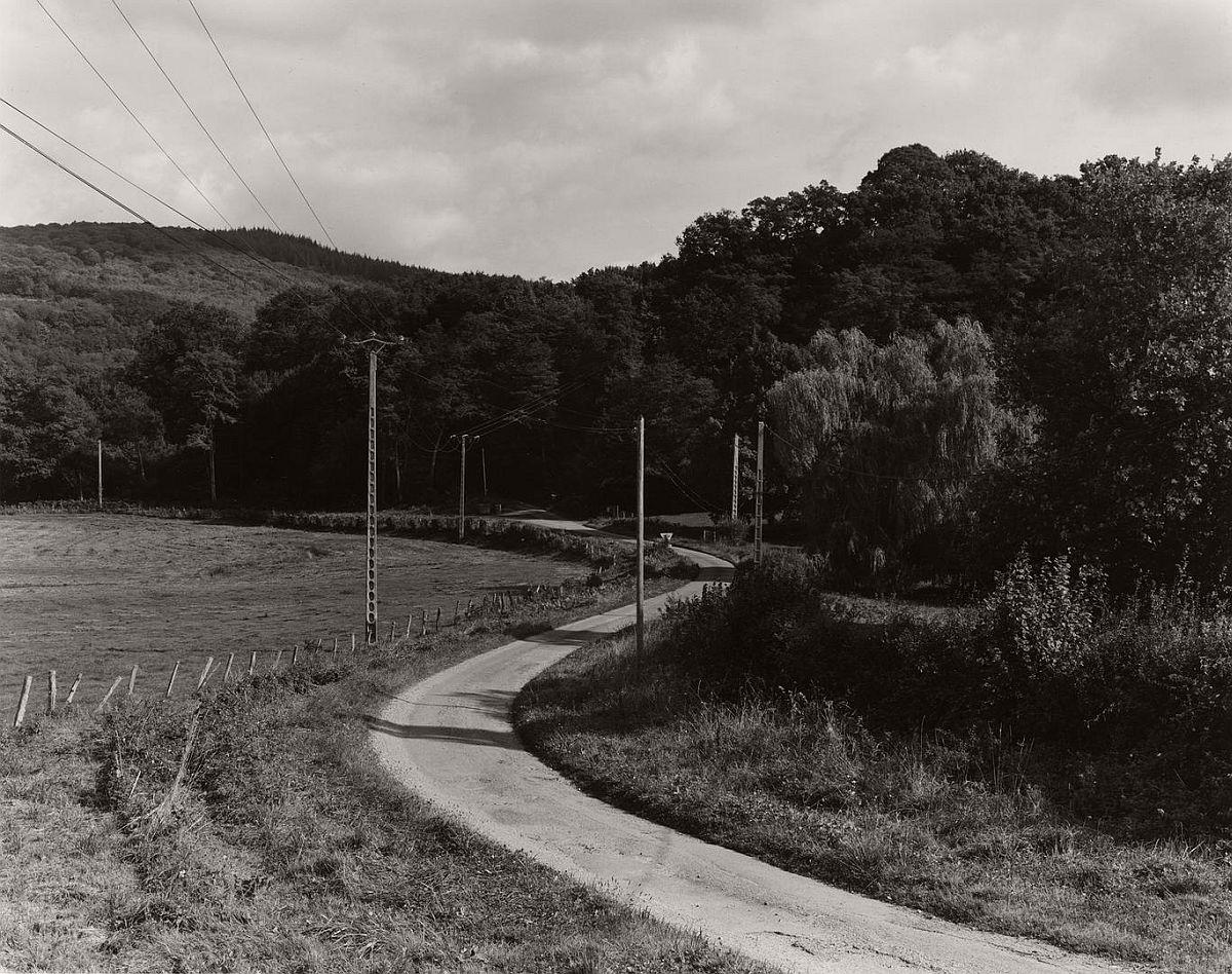 wayne-gudmundson-trees-of-burgundy-08