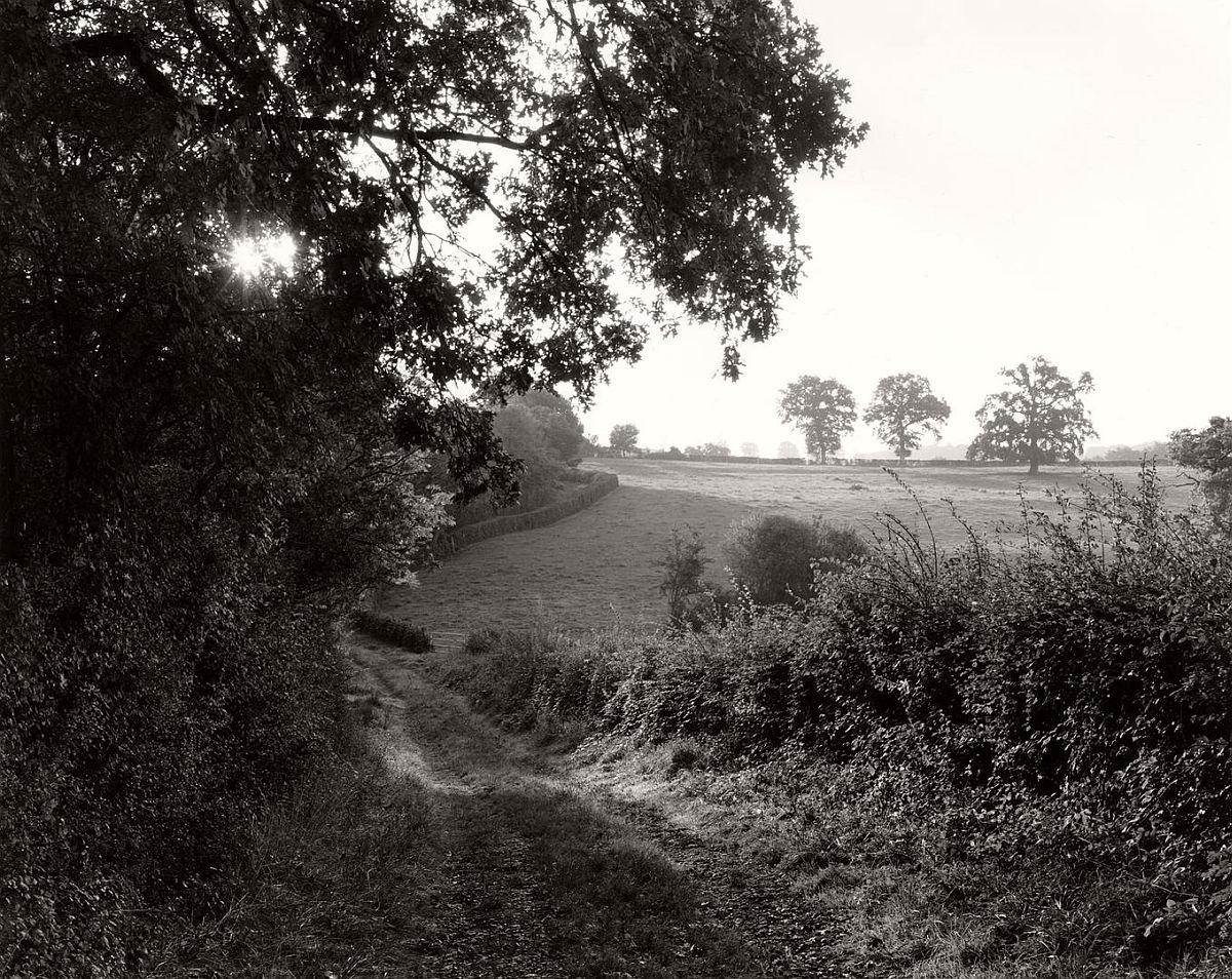 wayne-gudmundson-trees-of-burgundy-10
