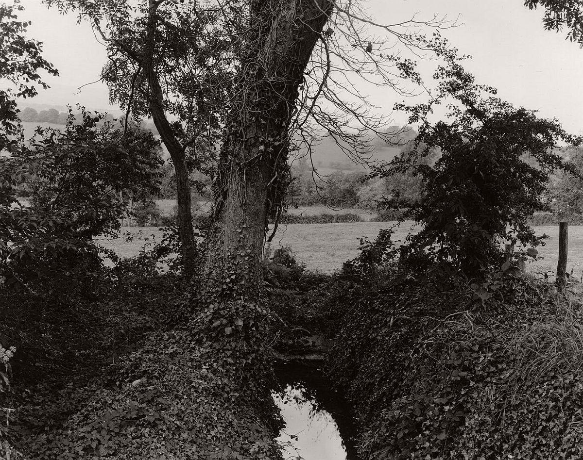 wayne-gudmundson-trees-of-burgundy-11