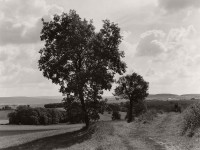 Wayne Gudmundson: Trees of Burgundy
