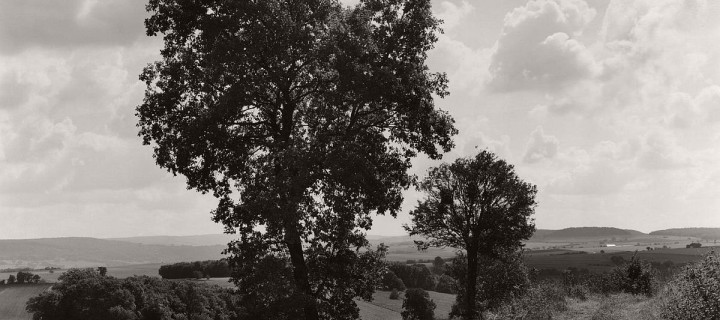 Wayne Gudmundson: Trees of Burgundy