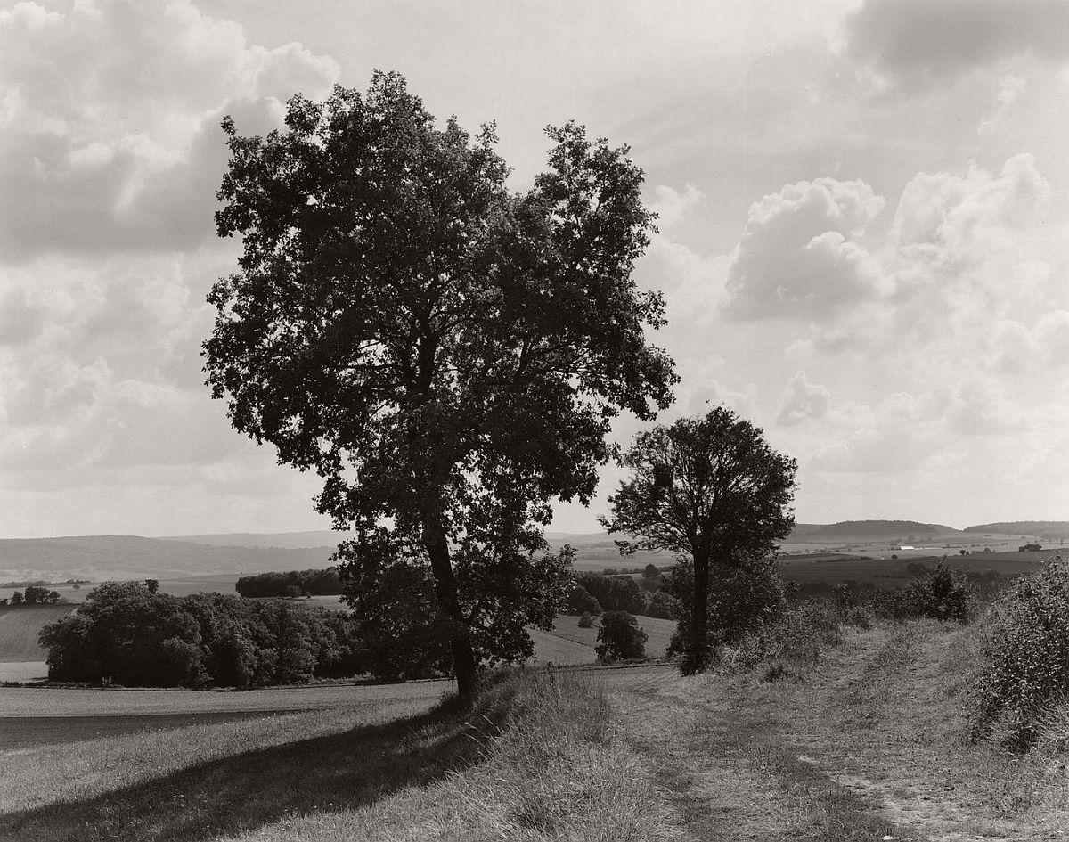wayne-gudmundson-trees-of-burgundy-12