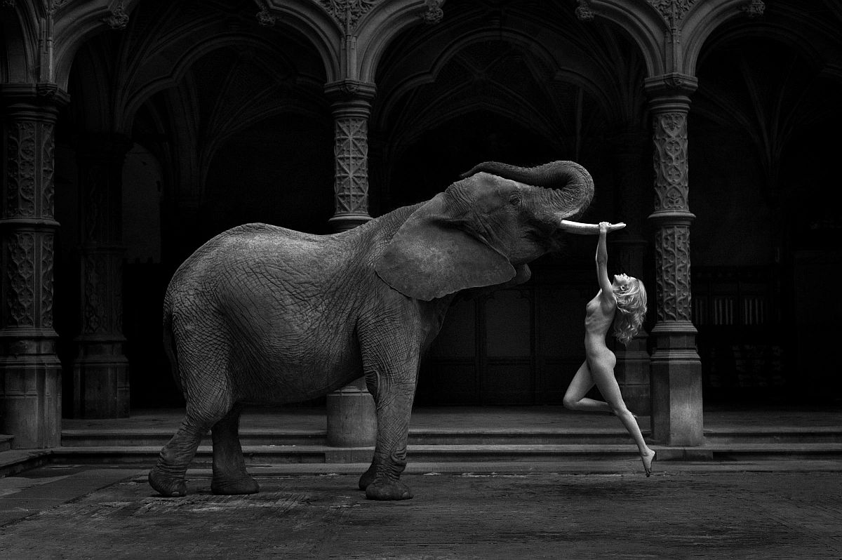 Consider, Nude women and elephants