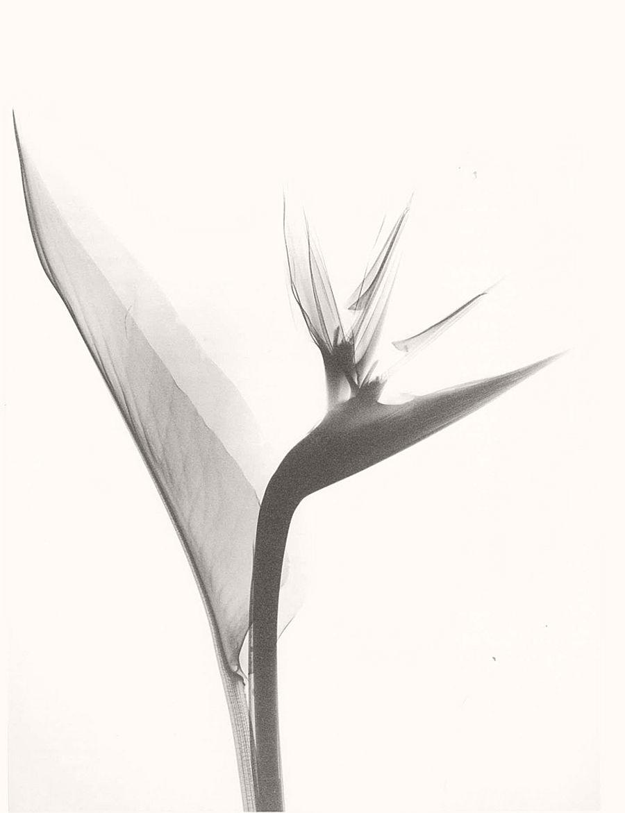 dr-dain-l-tasker-floral-studies-01
