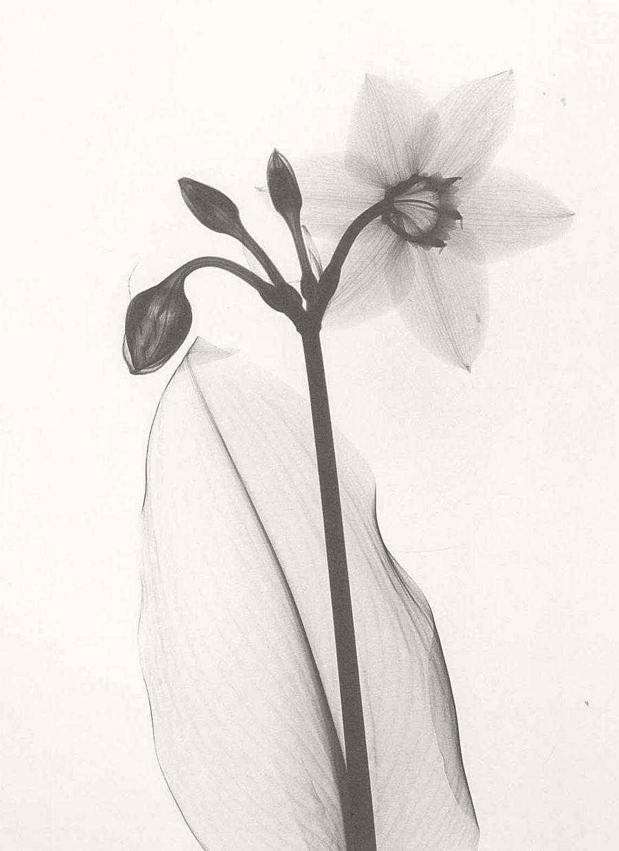 dr-dain-l-tasker-floral-studies-02