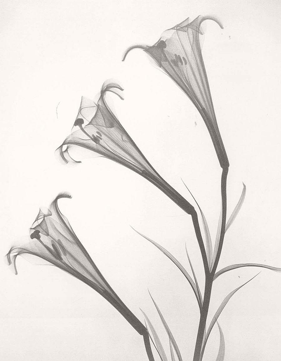 dr-dain-l-tasker-floral-studies-04