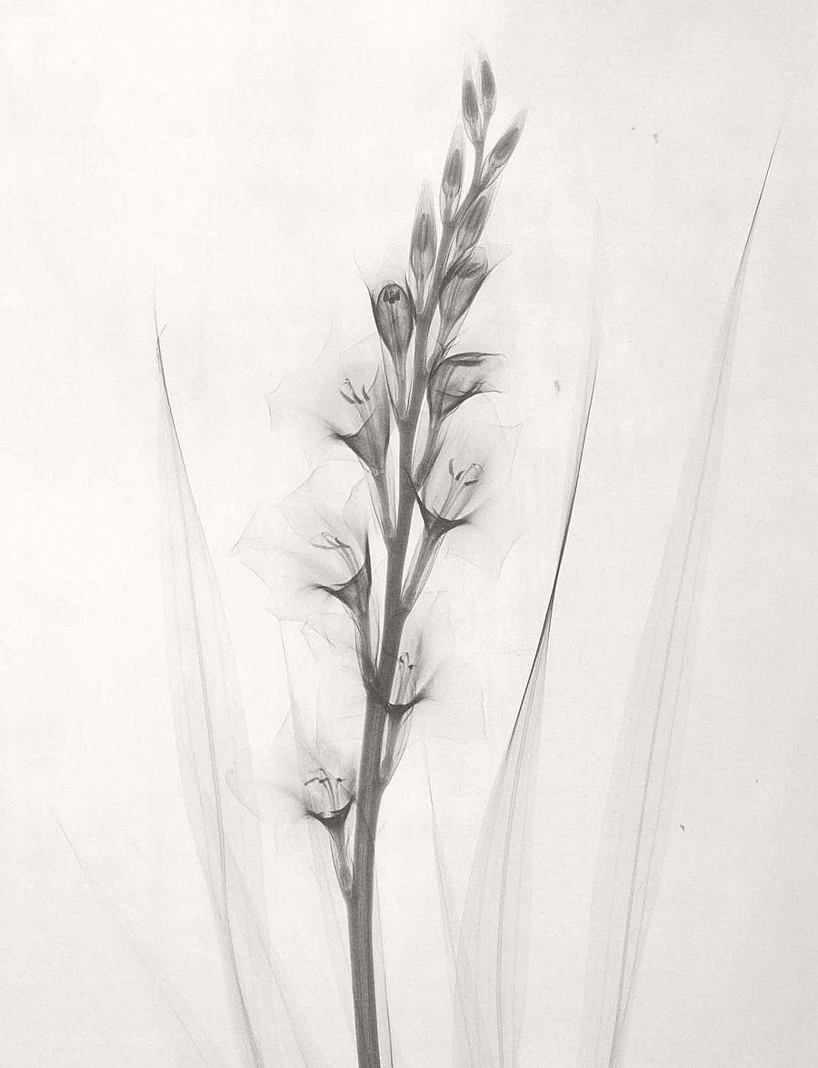 dr-dain-l-tasker-floral-studies-05