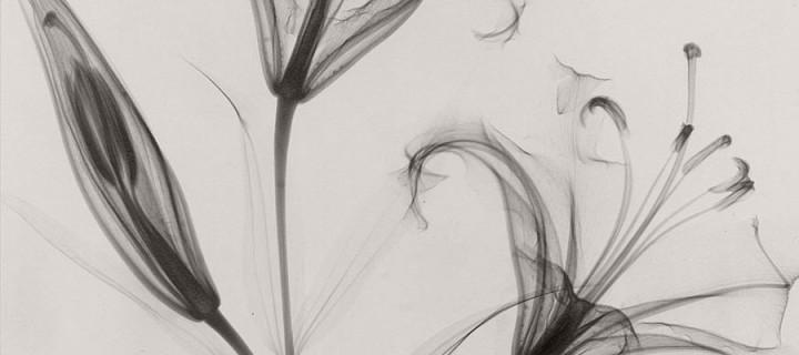 Dr. Dain L. Tasker: Floral Studies