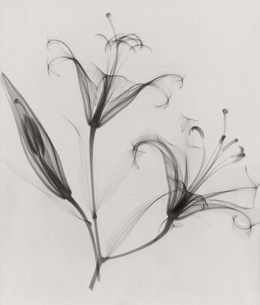 dr-dain-l-tasker-floral-studies-07