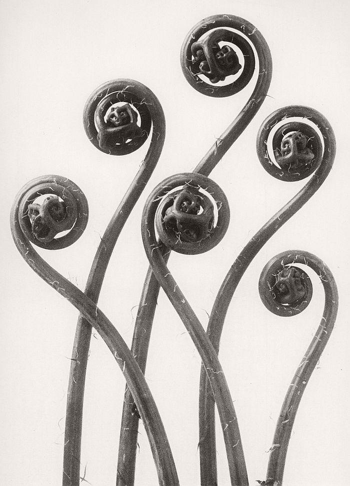 karl-blossfeldt-bw-fine-art-botanical-photographer-01