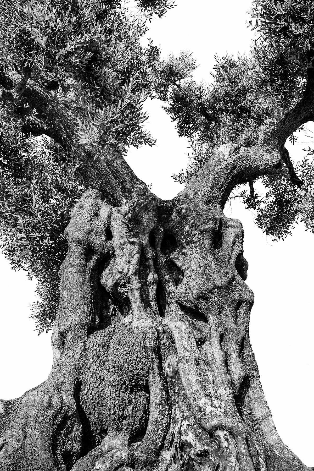 martin-ogolter-Monumentali-nature-landscape-photographer-05