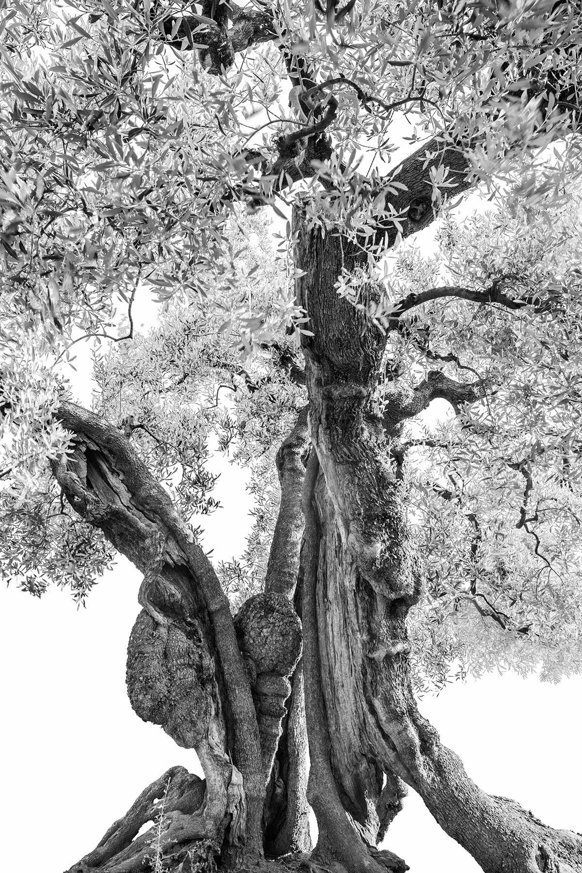 martin-ogolter-Monumentali-nature-landscape-photographer-12