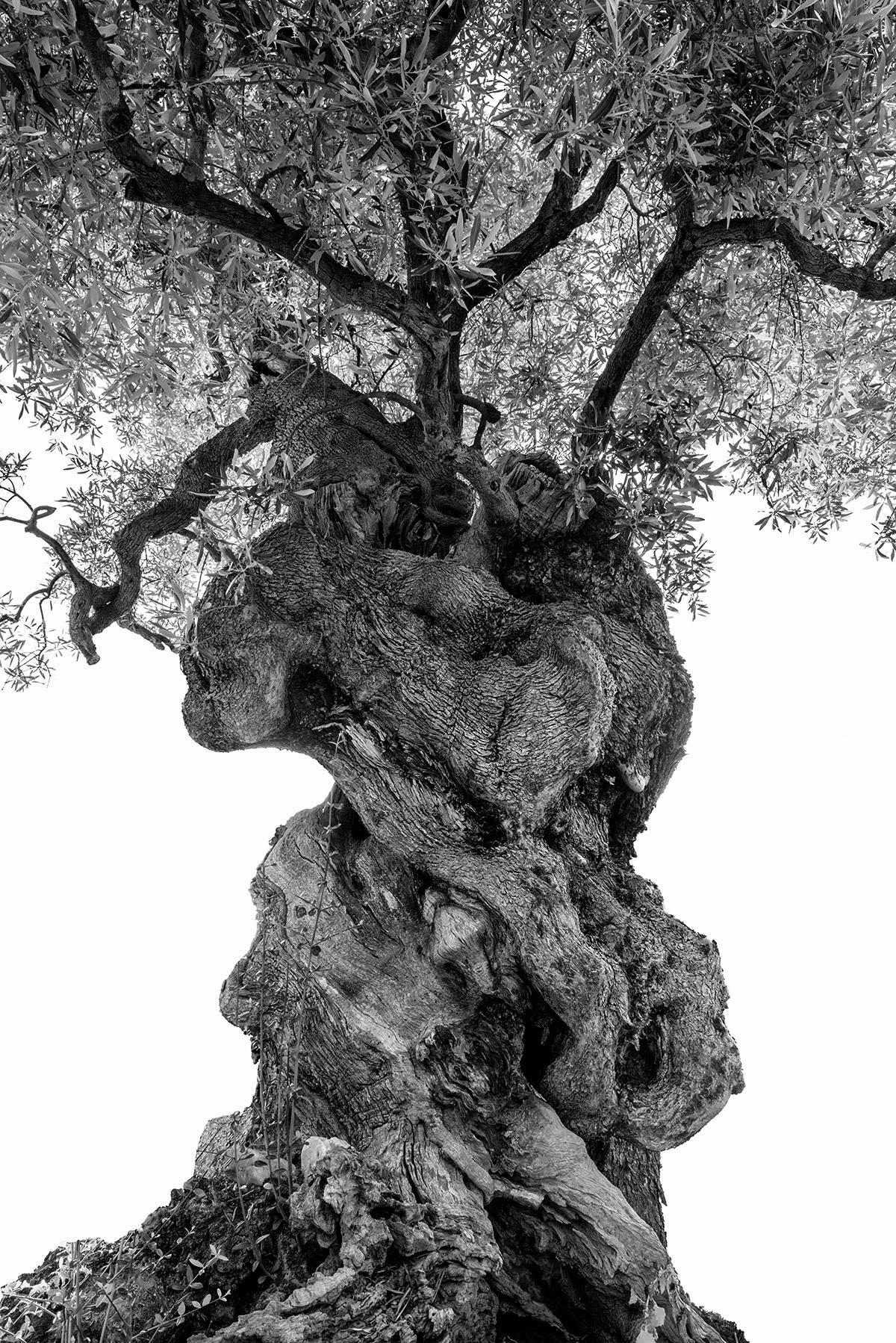 martin-ogolter-Monumentali-nature-landscape-photographer-14