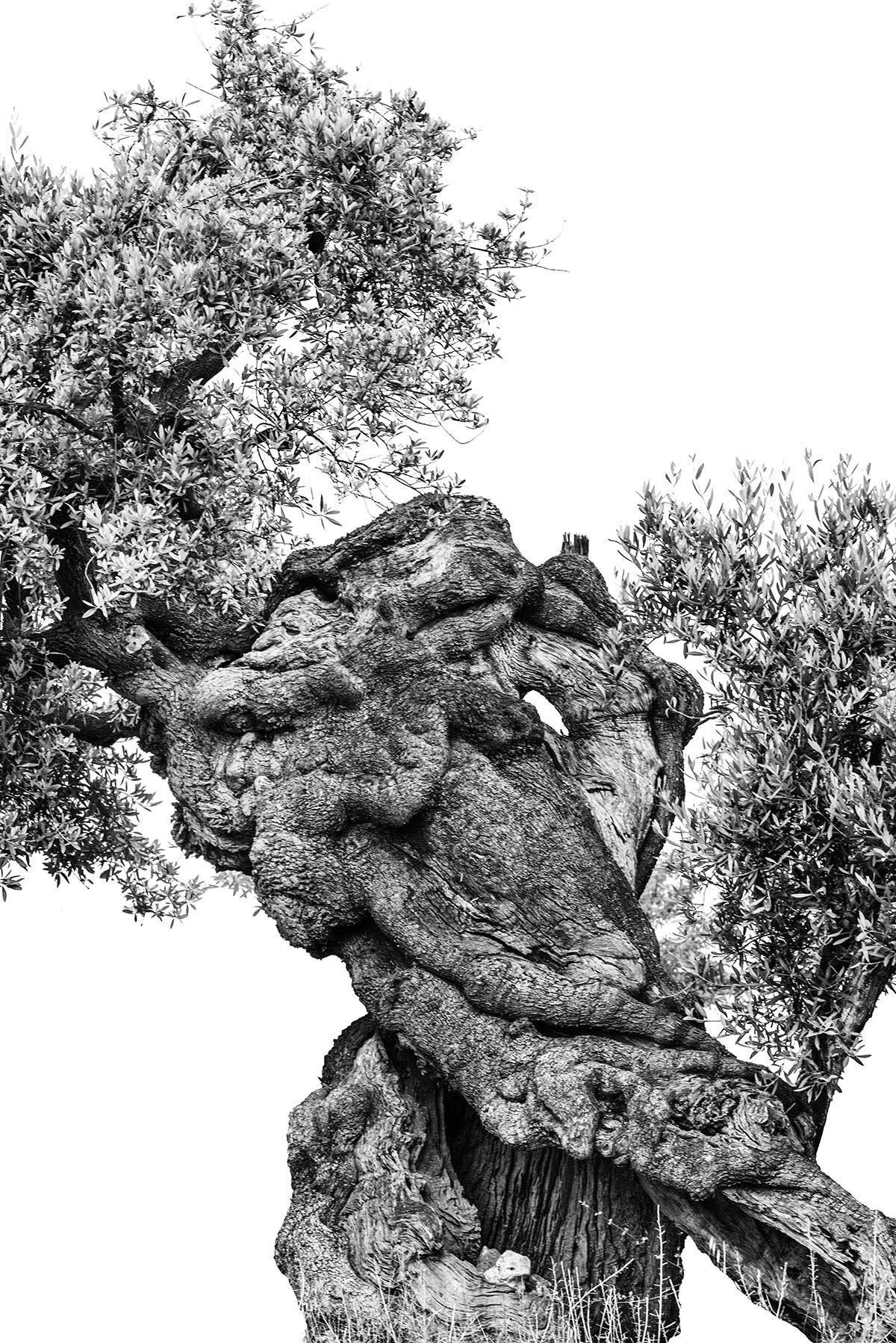 martin-ogolter-Monumentali-nature-landscape-photographer-17