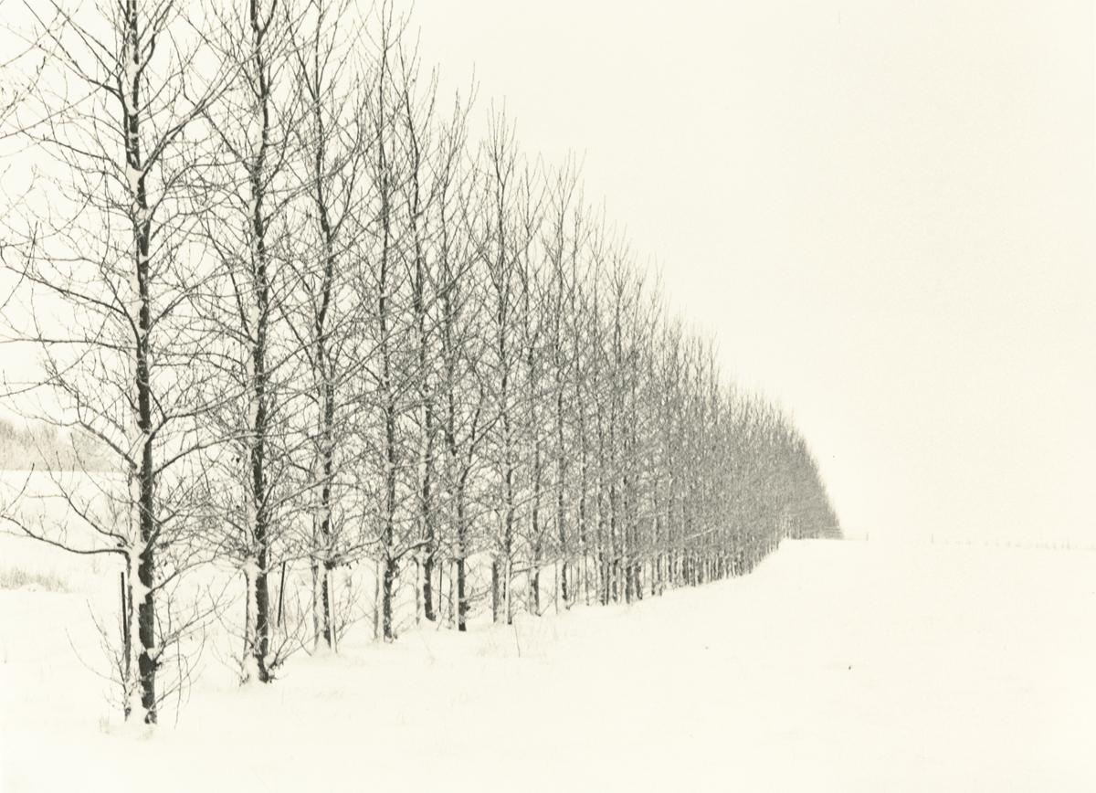 © Tim Rudman - Iceland, an Uneasy Calm