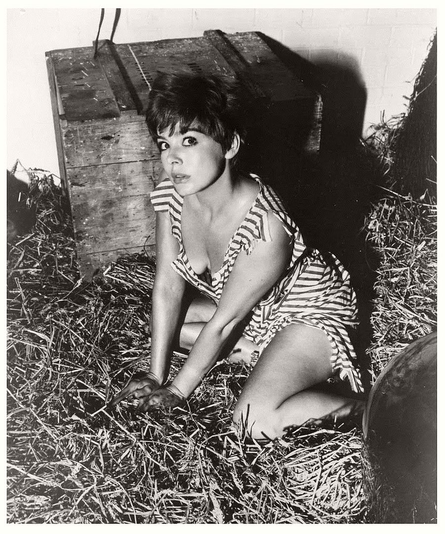 Janet Munro-hollywood-actresses-top-20-hottest-1960s-in-bw