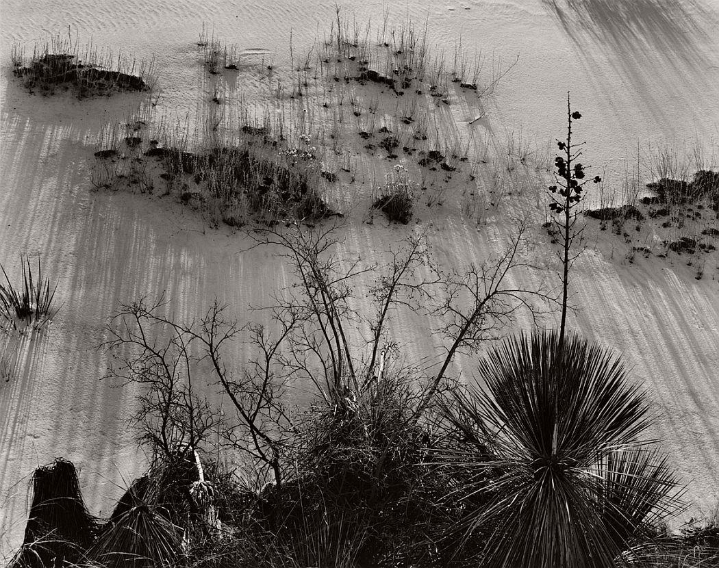 © Brett Weston