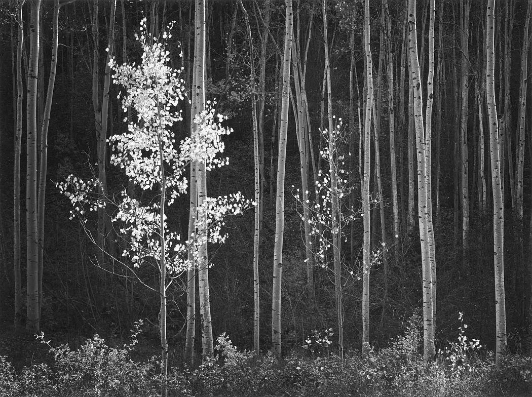 ansel-adams-early-works-02