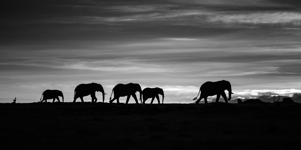 francois-pringuet-wildlife-photographer-01