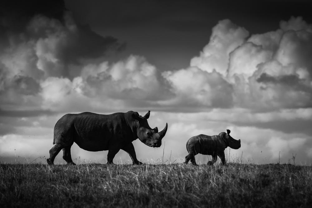 francois-pringuet-wildlife-photographer-05