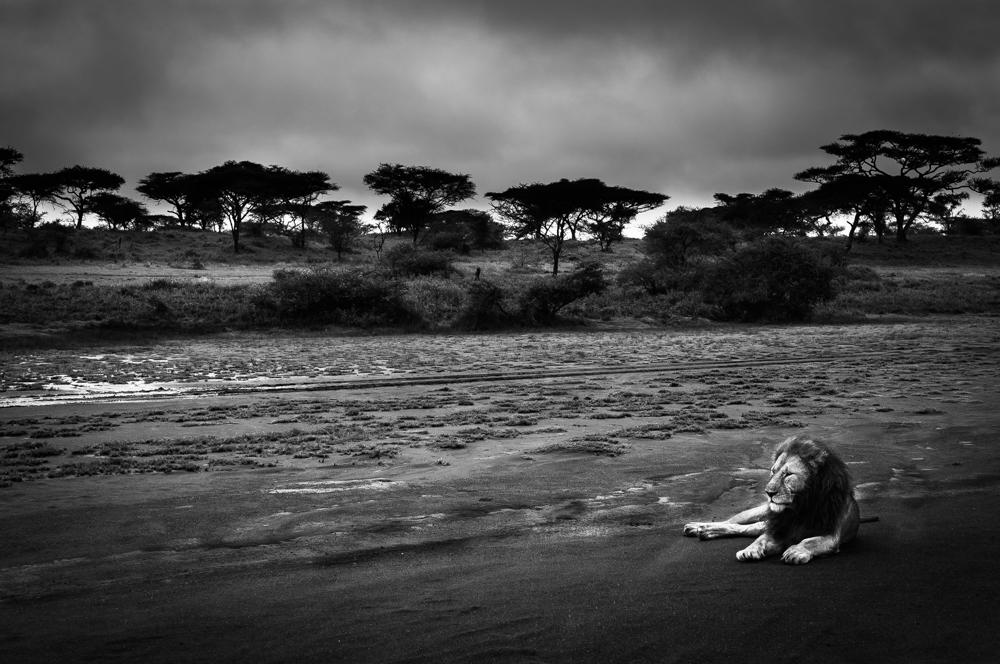 francois-pringuet-wildlife-photographer-06
