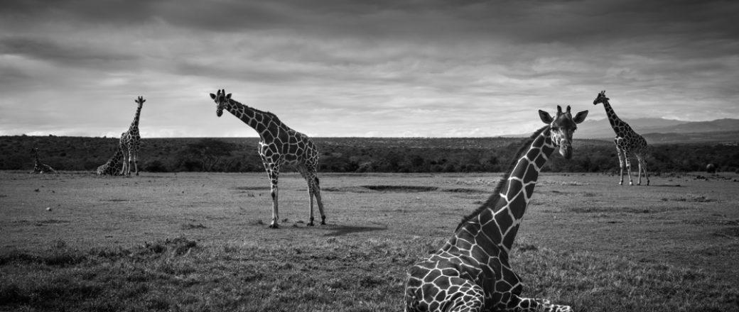 Interview with Wildlife photographer François Pringuet