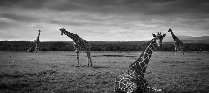 Interview with Wildlife photographer François Pringuet
