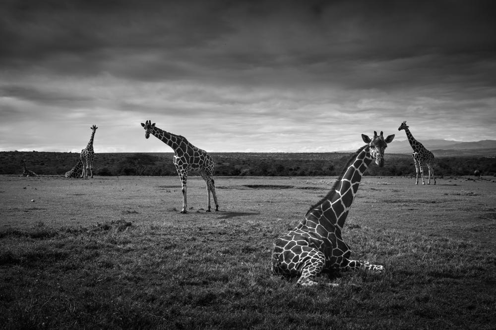 francois-pringuet-wildlife-photographer-07