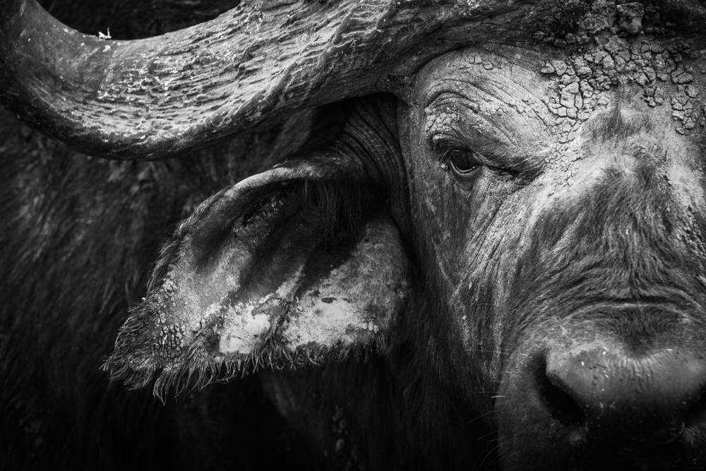 francois-pringuet-wildlife-photographer-09