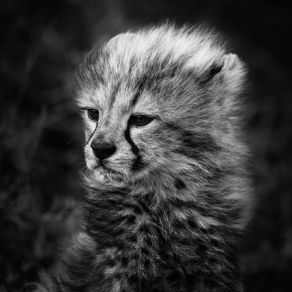 francois-pringuet-wildlife-photographer-10