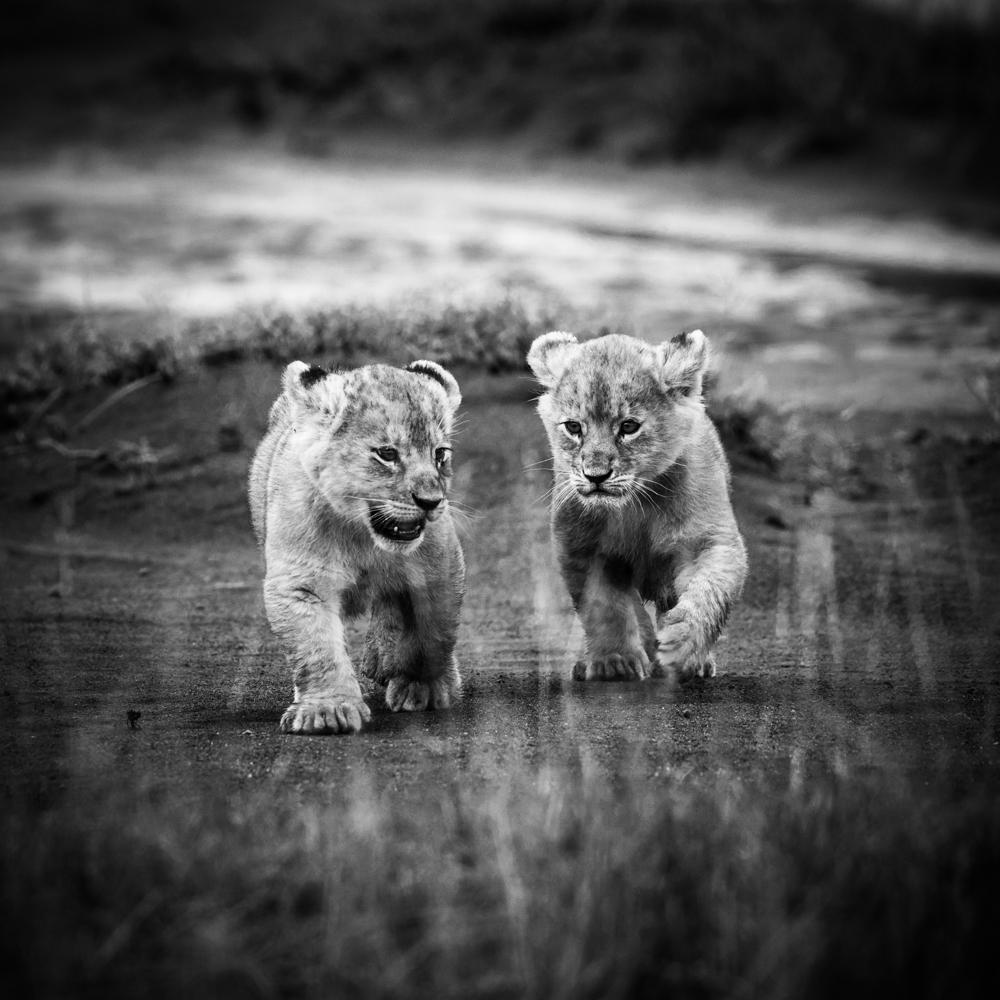 francois-pringuet-wildlife-photographer-11