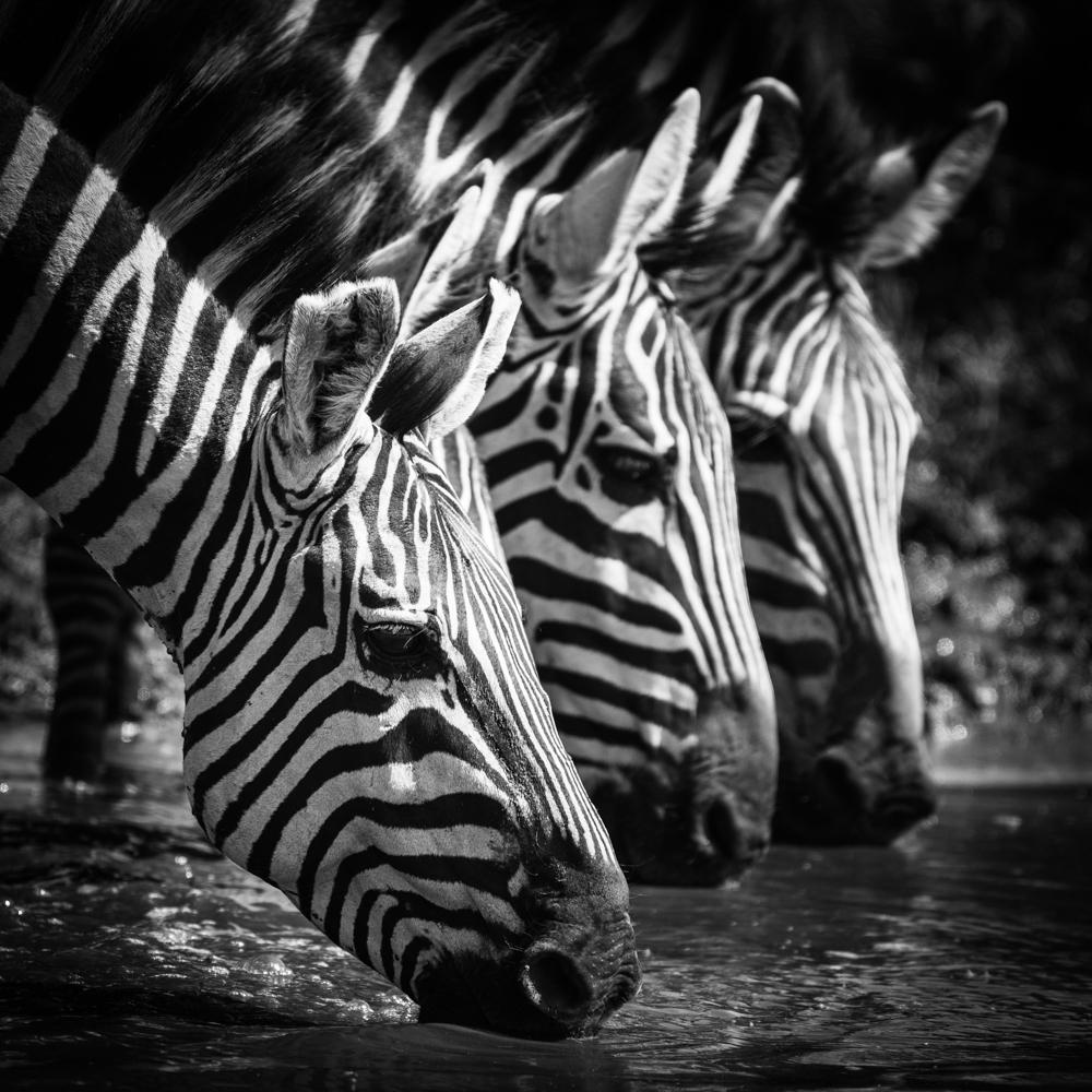 francois-pringuet-wildlife-photographer-12