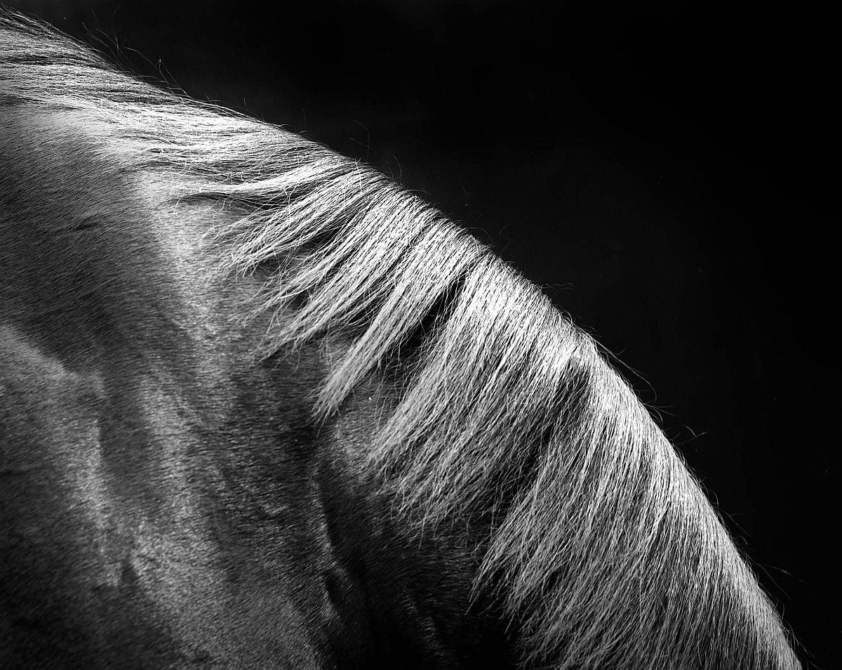 neil-latham-american-thoroughbred-horses-02