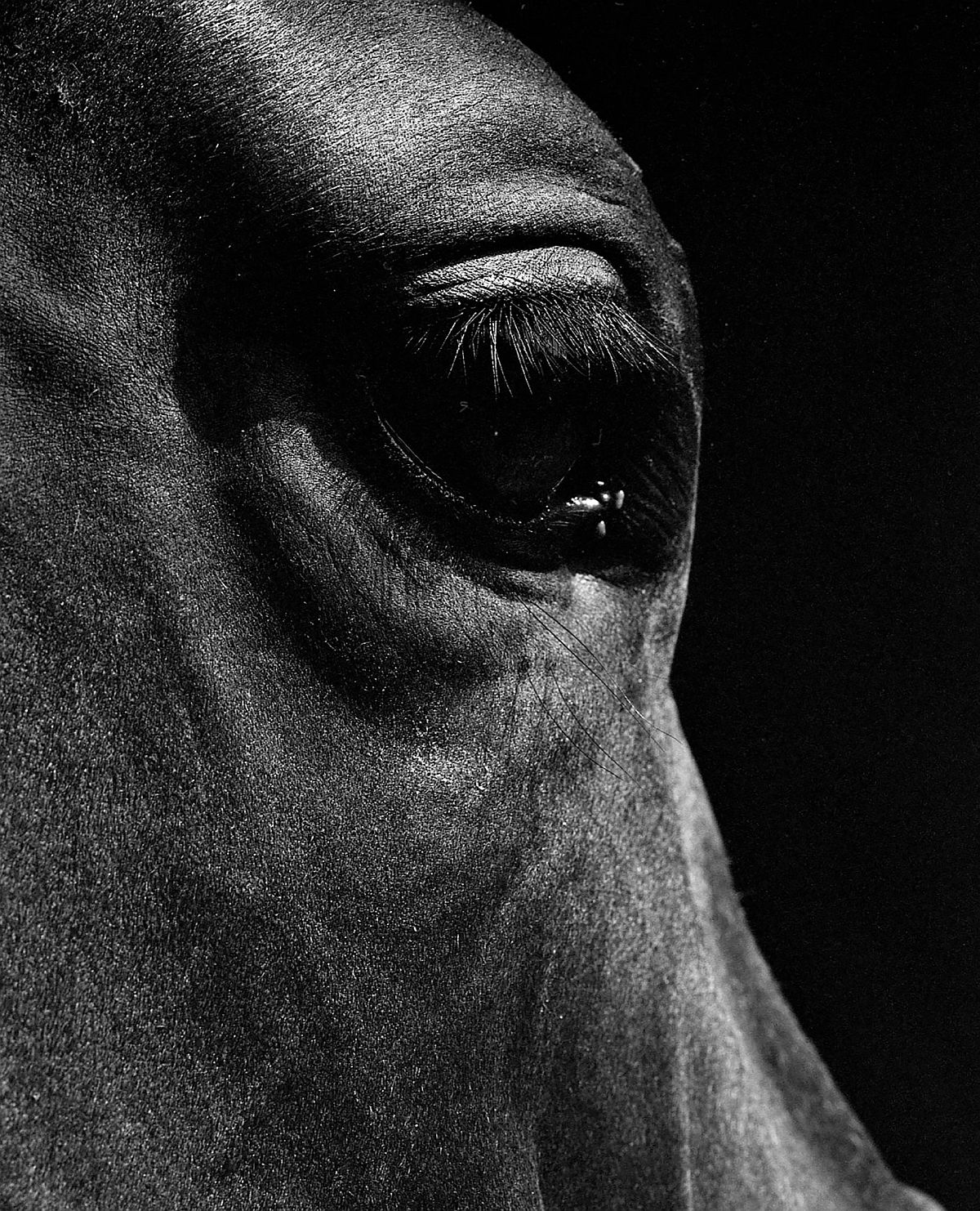 neil-latham-american-thoroughbred-horses-03