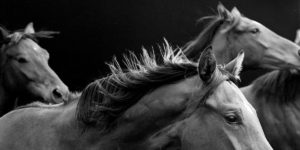 Neil Latham: American Thoroughbred
