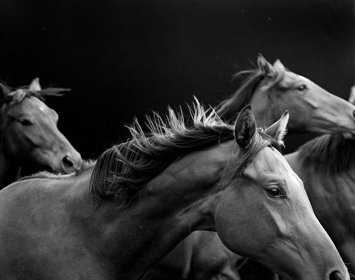 neil-latham-american-thoroughbred-horses-04