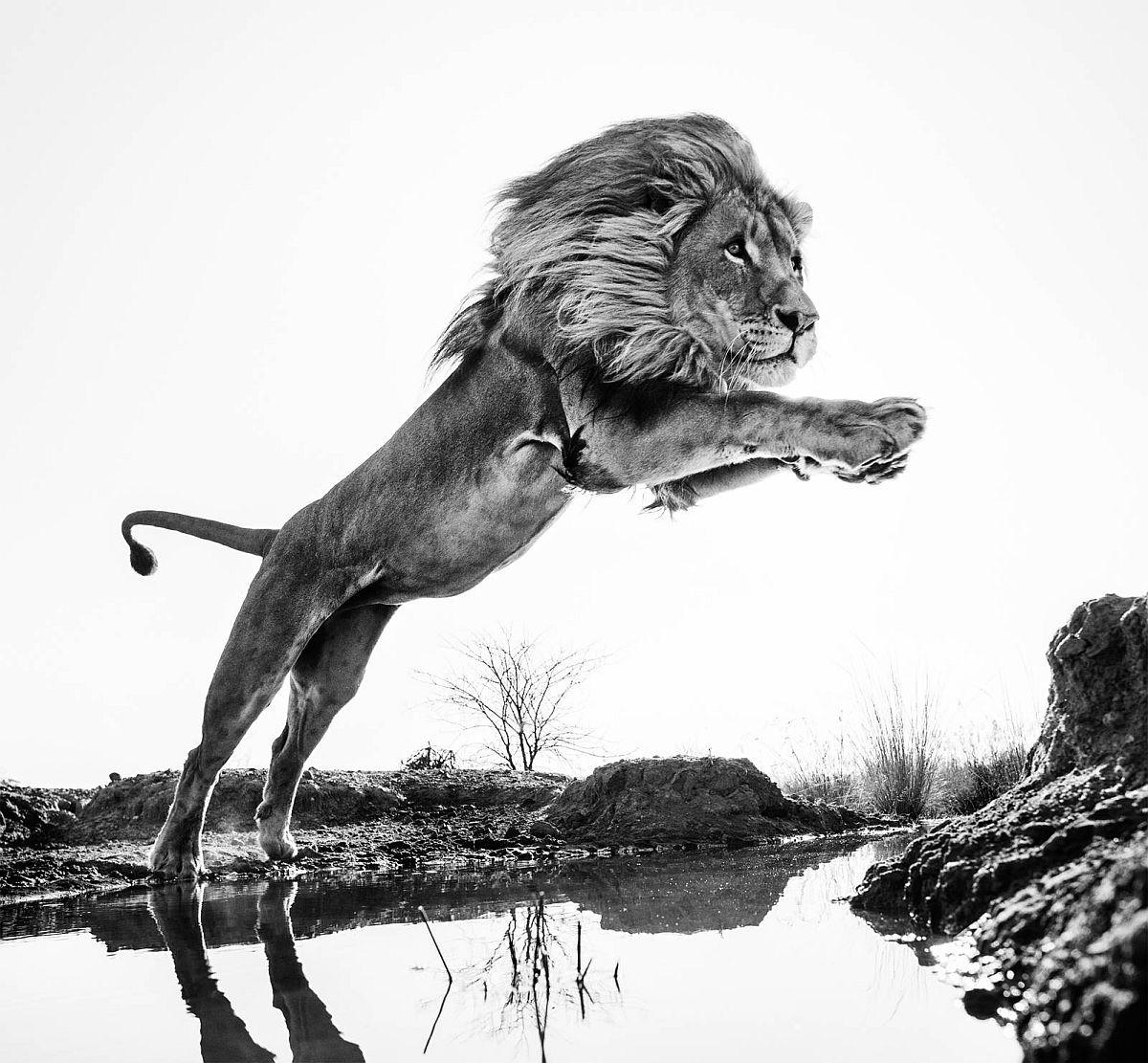 david-yarrow-wild-encounters-02