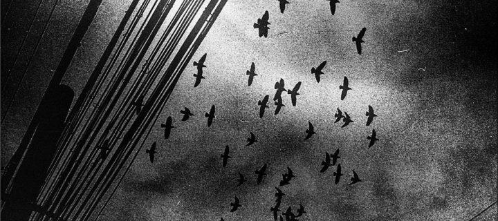Tim Gao: Invisible Theatre