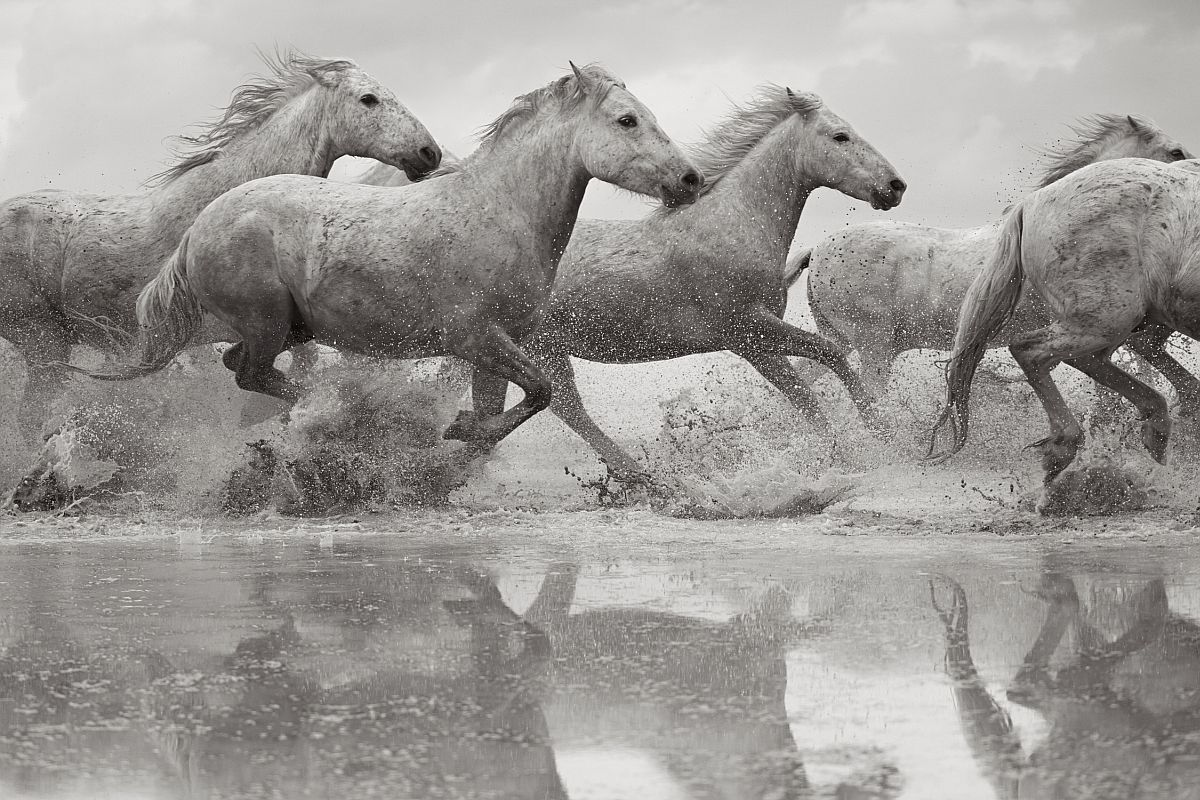 drew-doggett-band-of-rebels-white-horses-of-camargue-03