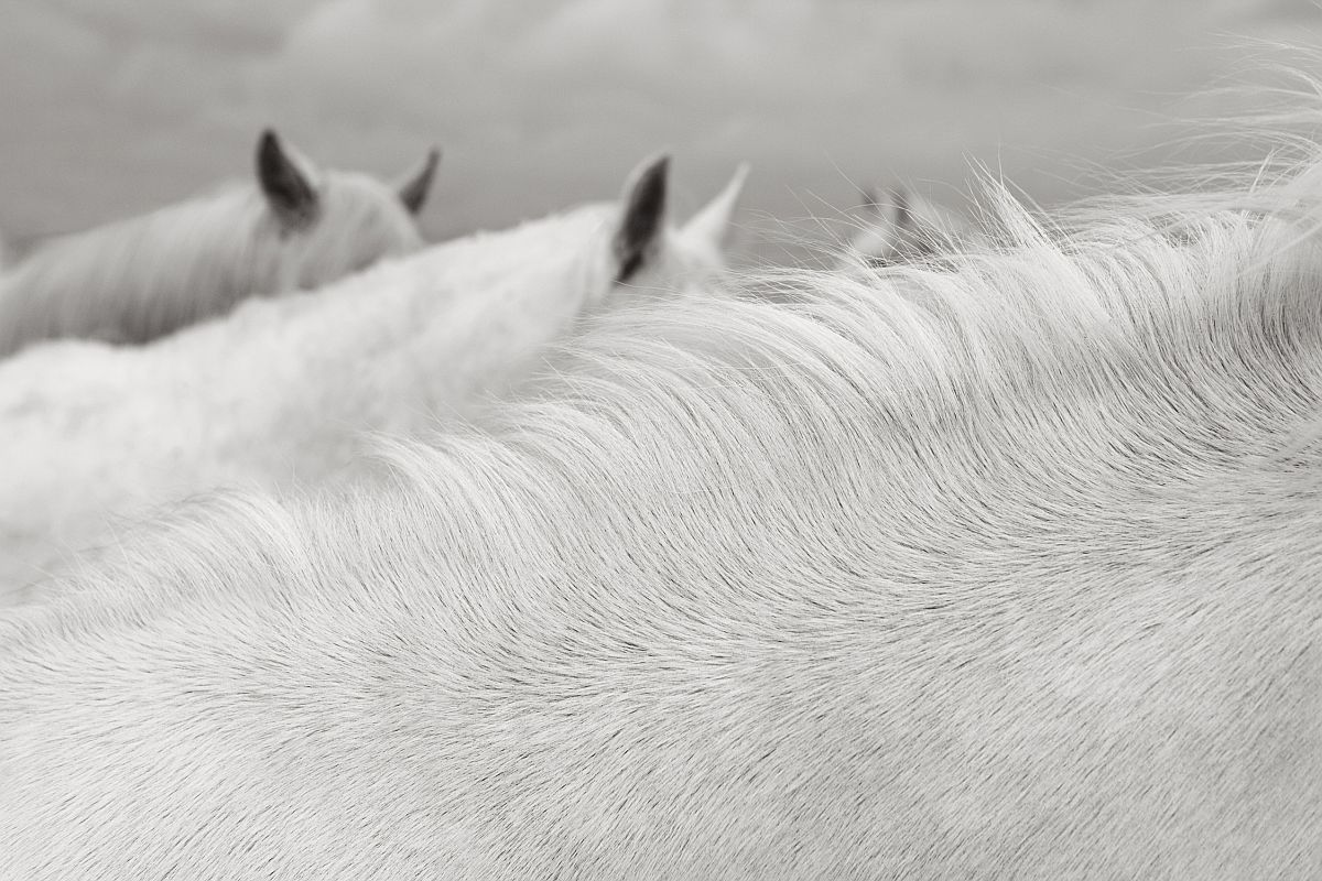 drew-doggett-band-of-rebels-white-horses-of-camargue-08